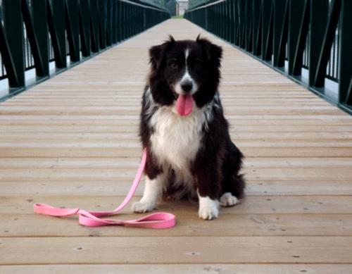 Onde passear com seu cão em BH